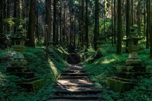 防护林林地