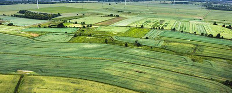 基本农田可以建苗圃吗