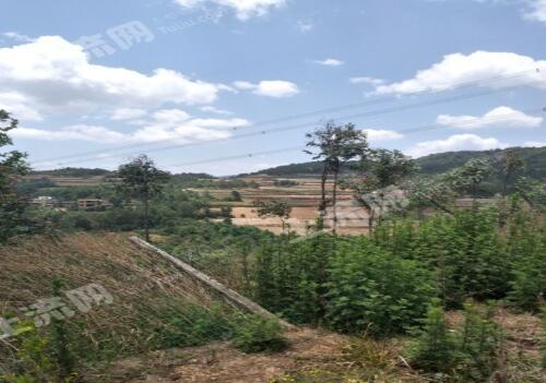 林地的养殖申报