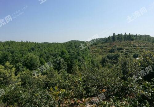 林地养殖申报条件
