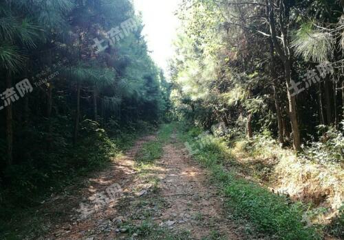 林地养殖申报手续