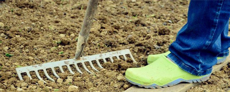 碱性土壤适合种植什么