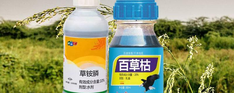草铵膦与百草枯的区别