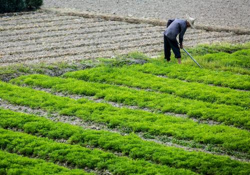 劳作的农民
