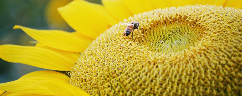 蜜蜂养殖技术书籍