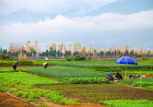 什么是农村集体土地使用权流转契税