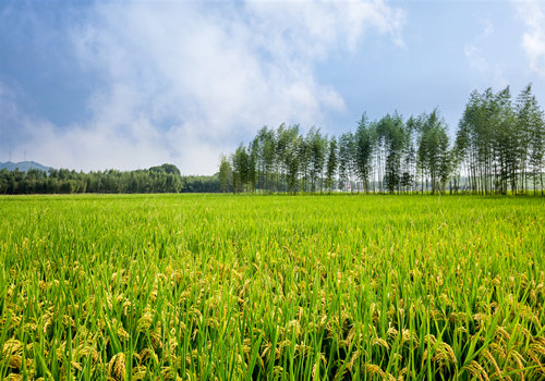 农村集体土地使用权流转契税怎么缴纳
