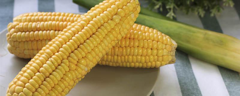 哪种玉米是转基因的