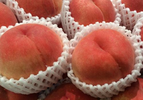 采收的水蜜桃