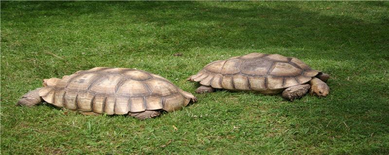 草地上的乌龟