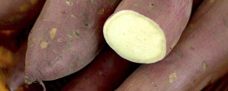 切开的新鲜红薯