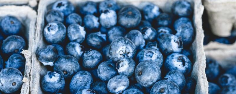 麻江蓝莓什么时候成熟