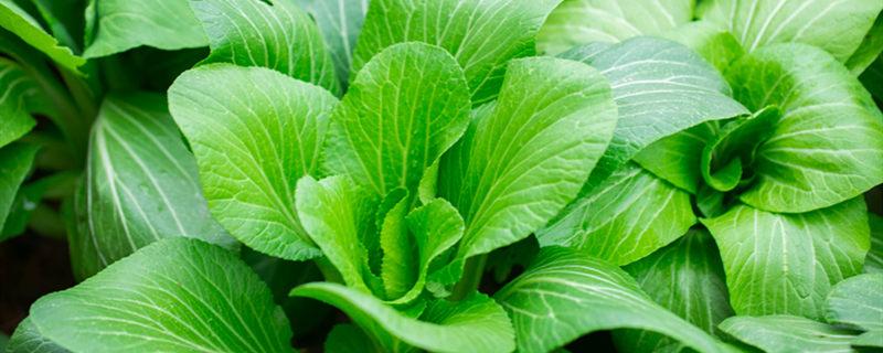 阳台怎么种蔬菜