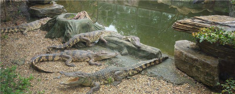 鳄鱼冬天怎么养