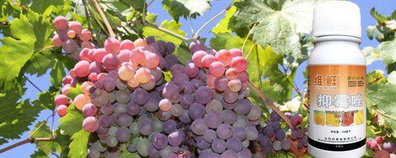抑霉唑在葡萄上的应用