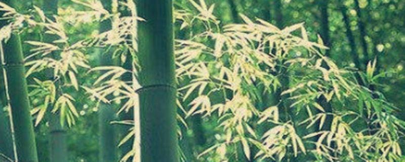 雷竹种植技术