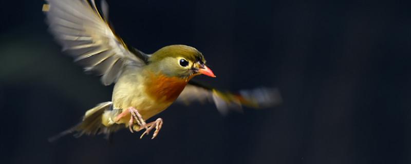 什么植物用鸟传播种子