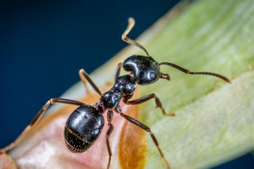 怎么消灭蚂蚁窝