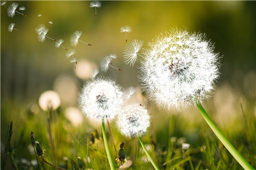 风传播种子