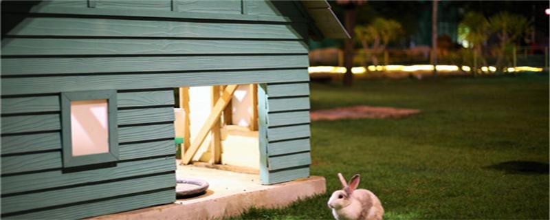 小兔子怎么过冬