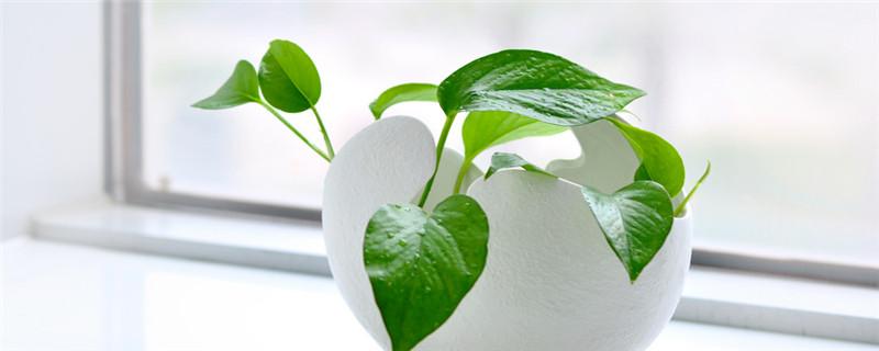 绿植生虫怎么办