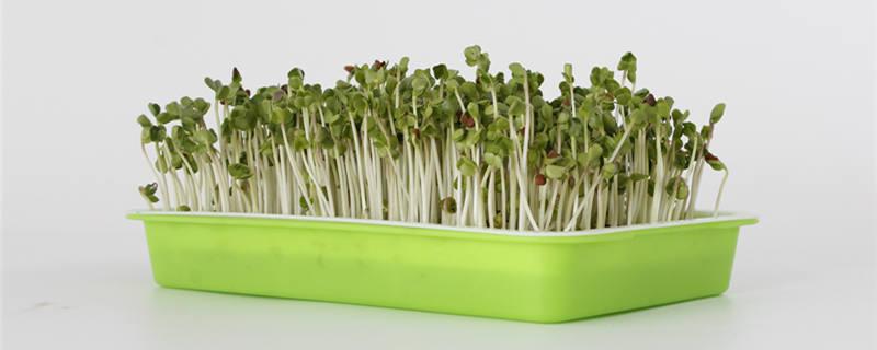 豆芽菜是发物吗