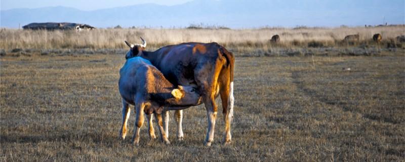 动物是怎么交配繁殖?
