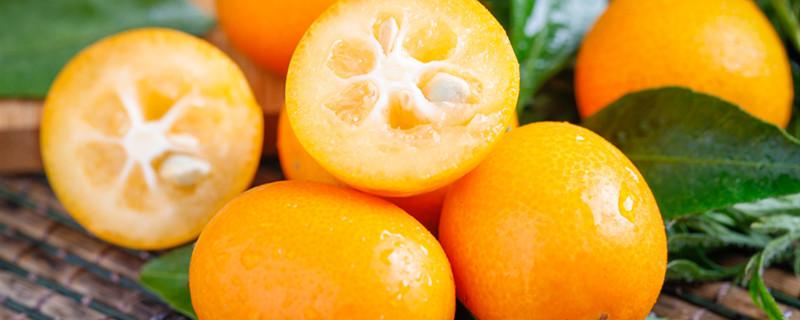 小金橘籽怎么种小盆栽