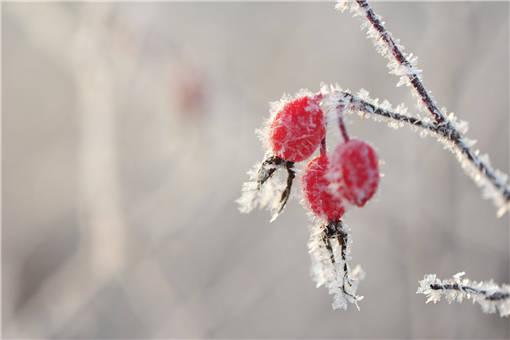 寒潮打霜注册新宝GG植物