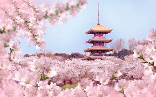 2020年國內賞櫻有哪些地方