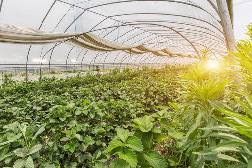 2020年现代农业产业园有哪些申报条件