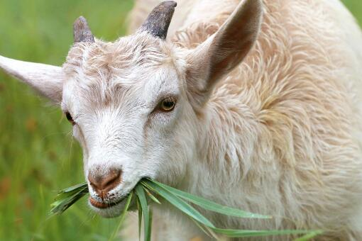 2020年农村养羊补贴标准