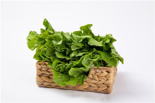 冬季可以种植的蔬菜有哪些
