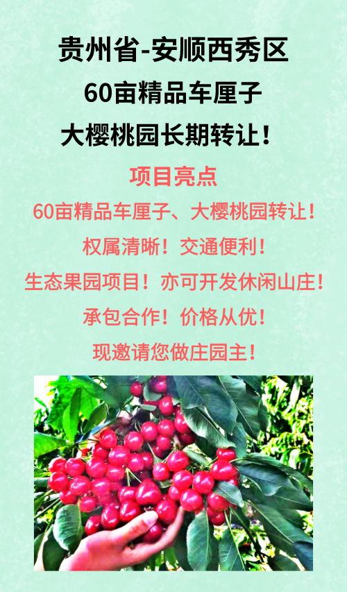 贵州安顺西秀区60亩精品车厘子园长期转让
