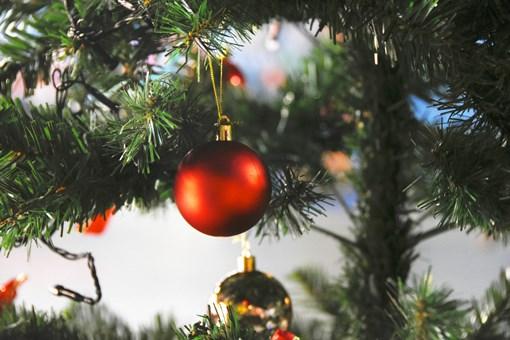 圣诞树价格是多少钱一棵