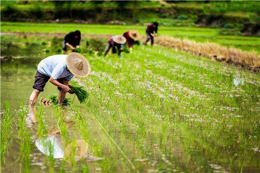 2020年農業重點補貼對象是哪些人群
