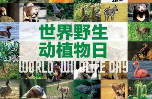 2020世界野生動植物日是哪一天?宣傳標語是什麽