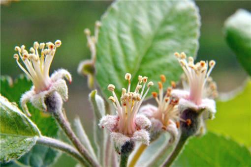 果树倒春寒的预防措施