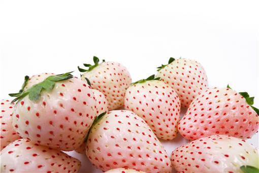 白草莓种植前景
