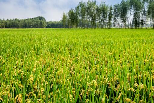 2020年農業有哪些補貼