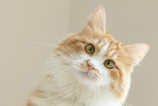 日本猫岛60多只猫意外死亡是怎么回事?日本猫岛在哪里?