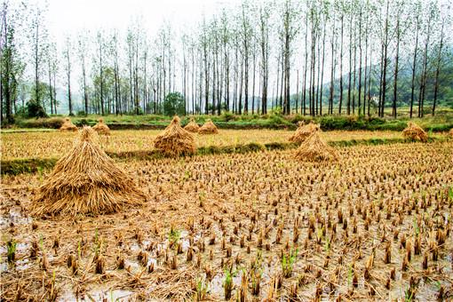 农村耕地可以转让使用权吗