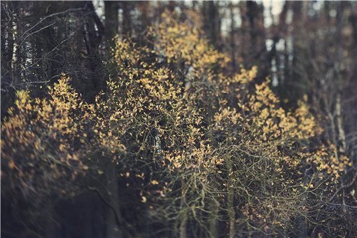 林权不动产登记怎么办理-摄图网