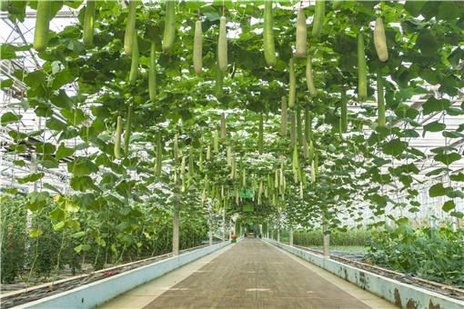 夏季大棚蔬菜高产技术-摄图网