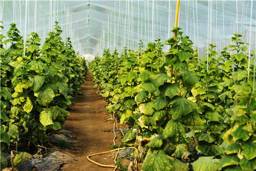 蔬菜大棚种植-摄图网