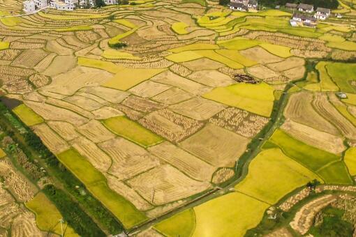 亂占耕地建房會接受哪些處罰-攝圖網