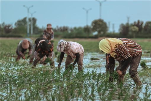 國家化肥商業儲備管理辦法-攝圖網