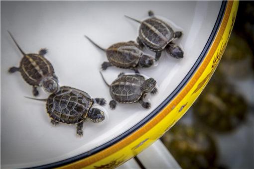 乌龟吃什么食物-摄图网