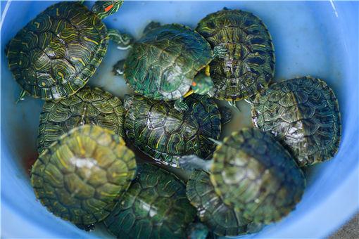 乌龟-摄图网