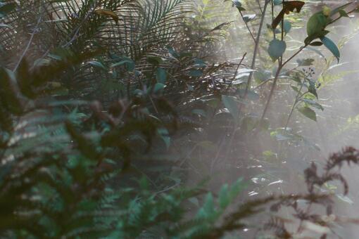 云南龙陵发现新物种高黎贡球兰-摄图网